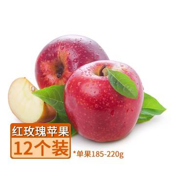 【亚博下载地址】新西兰 QUEEN 红玫瑰苹果12个单果185-220g 80587