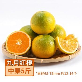 【亚博下载地址】湖北 秭归九月红橙 中果5斤 果径65-75mm 约12-16个 80639