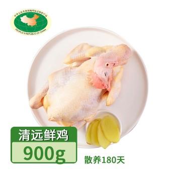 【亚博下载地址】清远 天农 巴拿马清远鸡鲜鸡1只(散养180天)80420地标产品
