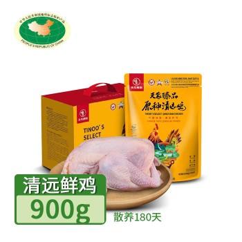 【亚博下载地址】清远 天农 巴拿马清远鸡鲜鸡1只(散养180天)80649地标产品