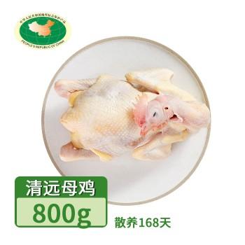 【亚博下载地址】清远 天农凤中皇168天 清远母鸡800g(散养168天)冷冻鸡肉整鸡肉类80420地标产品