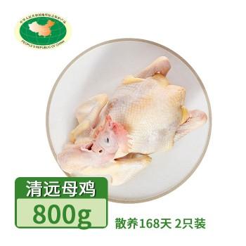 【亚博下载地址】清远 天农凤中皇168天 清远母鸡800g(散养168天)2只装 冷冻鸡肉整鸡肉类80649地标产品