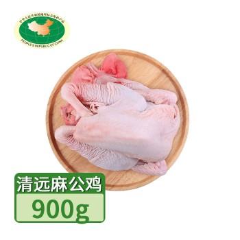【亚博下载地址】清远 天农 凤中皇 清远麻公鸡 1只900g 80420地标产品