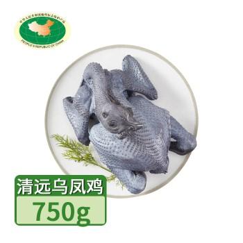 【亚博下载地址】清远 天农 凤中皇乌凤鸡(竹丝鸡)1只750g 80420地标产品