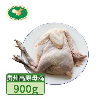 【亚博下载地址】贵州 天农 长顺高原老母鸡1只900g 80420地标产品