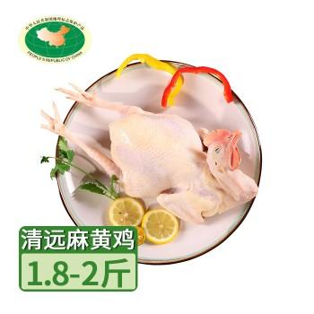 【亚博下载地址】清远 天农农家放养老母鸡麻黄鸡280天以上 1只900-1000g
