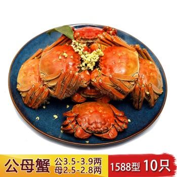 【亚博下载地址】果农汇 江苏阳澄湖 蟹之黄 大闸蟹公母蟹5对  (1588型10只)80429