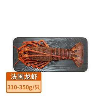 【亚博下载地址】真然星进口 法国圣保罗岩龙龙虾310-350g 80546 海鲜刺身