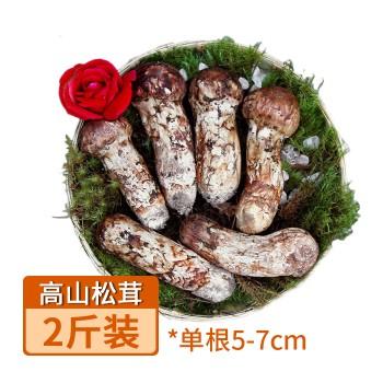 【亚博下载地址】云南 香格里拉高山松茸2斤 单根5-7cm